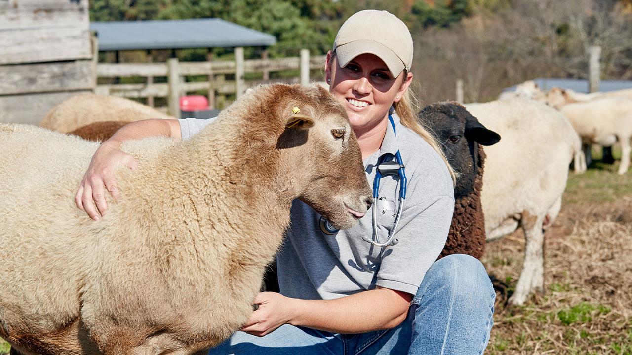 Veterinarians and public health | American Veterinary ...
