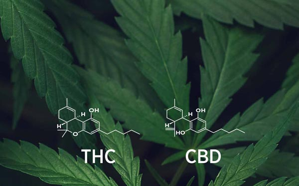 the hype and hope of veterinary cannabis   american veterinary medical  association  american veterinary medical association