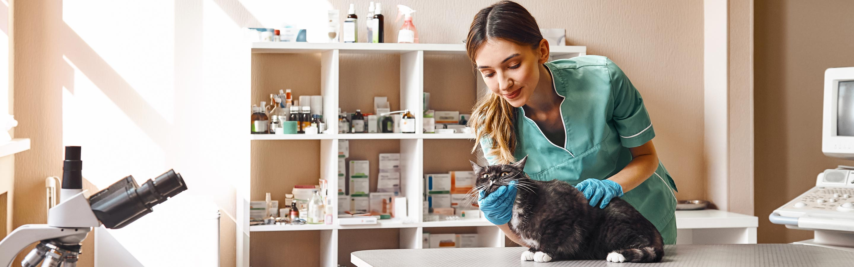 A female veterinary professional examines a cat in a clinic.