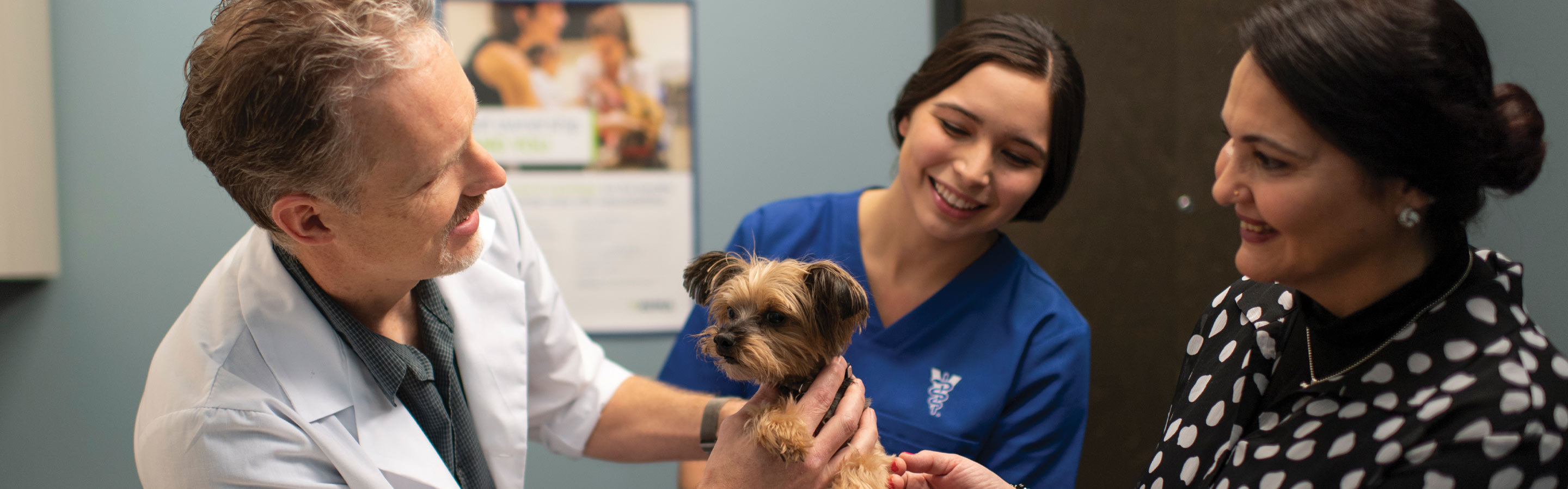 A male veterinarian and female veterinary technician examine a small dog with a client in a clinic setting.