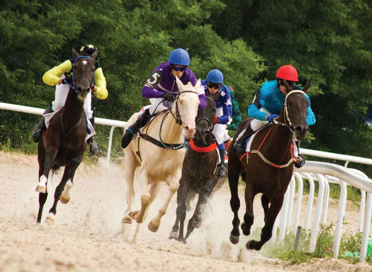 Racehorses on the track