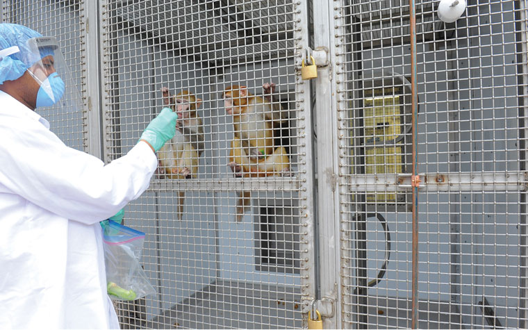 Yerkes employee wearing PPE interacts with research monkeys