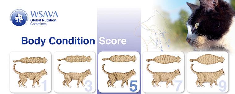 WSAVA score chart