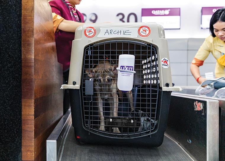 Archie in a transport crate