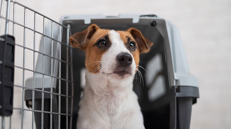 Dog emerging from a transport crate