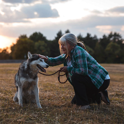 Woman petting husky