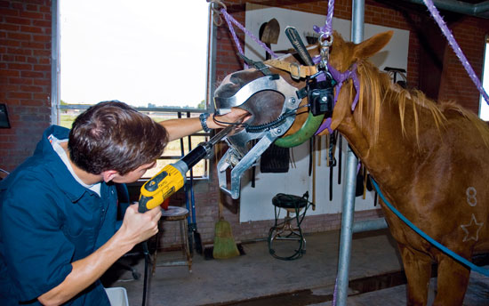 A veterinarian performs equine dentistry