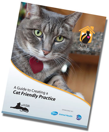 A Guide to Creating a Cat Friendly Practice