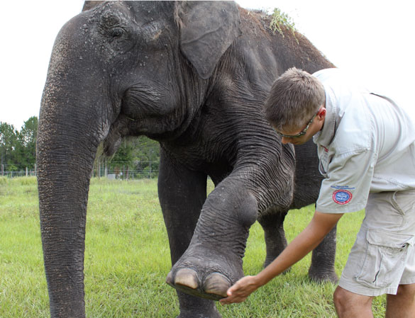 Erik Montgomery shows how to examine elephants' feet