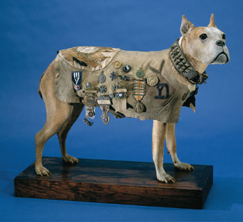 Sgt. Stubby Smithsonian display