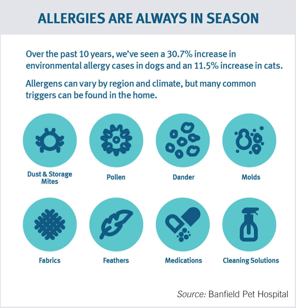"""Allergies are always in season"" infographic - Source: Banfield Pet Hospital"