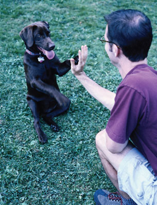 Man and sitting dog hand-to-paw