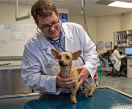 Dr. Barr examines a dog