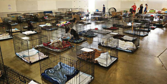 NC State Fairgrounds staging ground for rescued animals