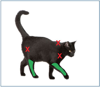 Cat illustration showing injection sites