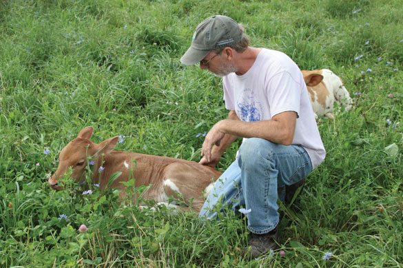 Cliff McConville in the field with a calf