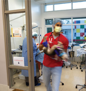 Anesthetized pet is ushered out while surgery continues on other patients