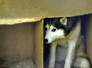 Timid dog hiding in a cubbyhole