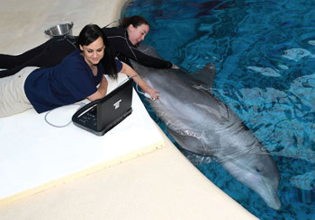 Dr. Ivaničić and Elizabeth Lee examine a dolphin