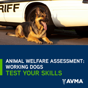 Animal Welfare Assessment: Working Dogs Test Your Skills