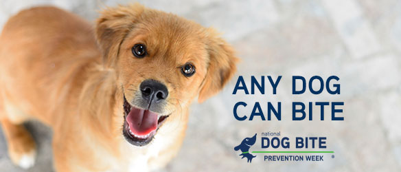 Any Dog Can Bite National Dog Bite Prevention Week