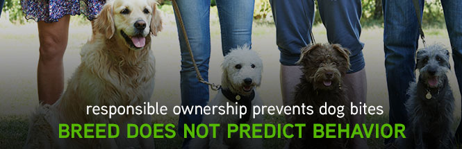 Responsible ownership prevents dog bites - Breed does not predict behavior