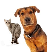강아지 사료 추천