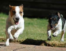Two dogs running outdoors