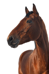Transporting Horses And Other Equids American Veterinary Medical Association