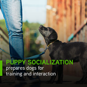 Puppy socialization prepares dogs for training and interaction