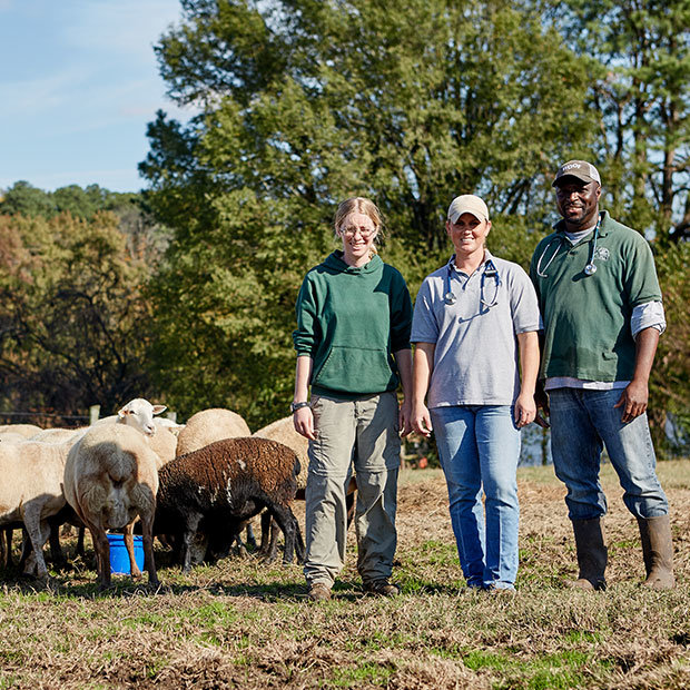 Rural veterinary team