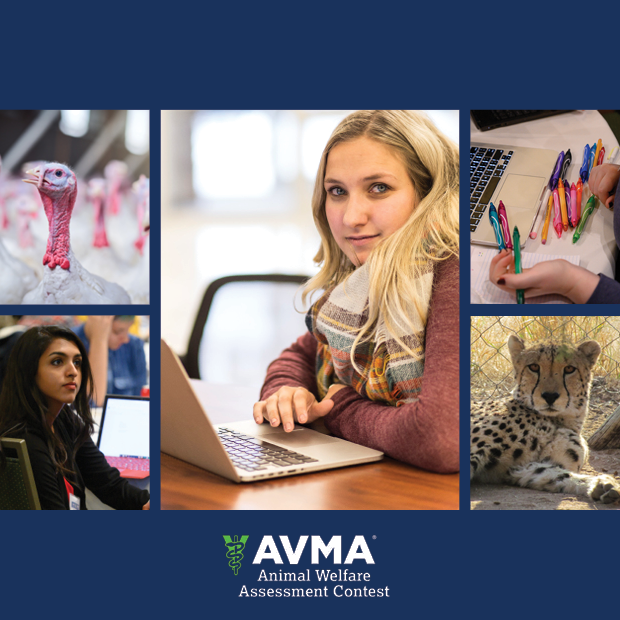 Student at a computer surrounded by scenes related to the Animal Welfare Assessment Contest (AWJAC)