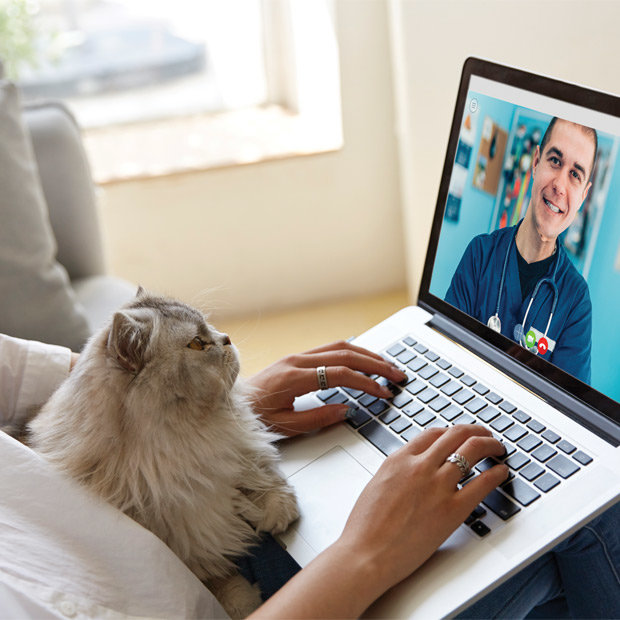 Someone has a video call on their computer with a cat on their lap. The computer screen shows a veterinarian.