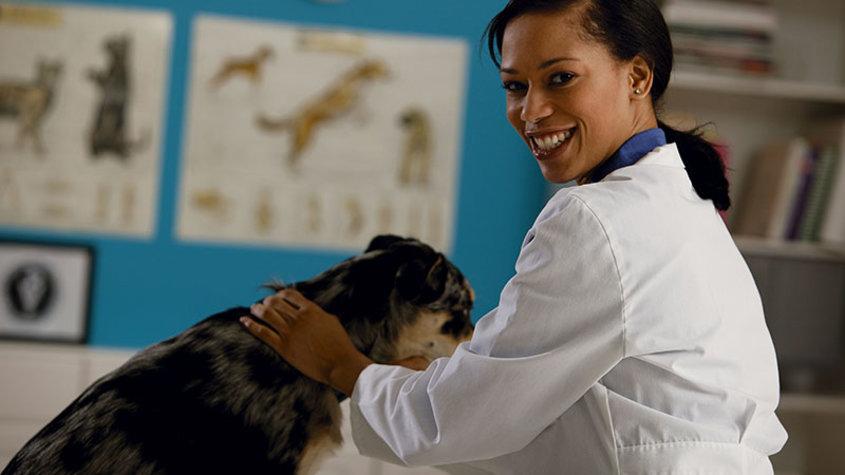 Veterinary student